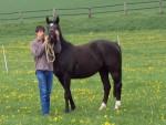 Pferdesprüche: Pferde und die gute alte Zeit