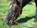 Pferdezubehör: Sattel, Trense und Co.