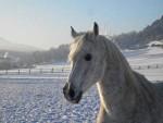 Mit den Pferden in den Schnee – Reiten im Winter
