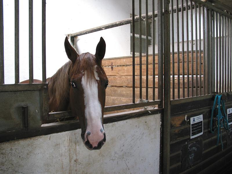 wann sind pferde ungl cklich dunkle boxen und zu wenig auslauf reiten. Black Bedroom Furniture Sets. Home Design Ideas