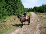 Ausritt mit Brockenblick im Harz – Wanderreiten im Harz