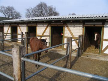 Sowohl das Pferd, als auch die Box sollten einmal täglich kontrolliert werden