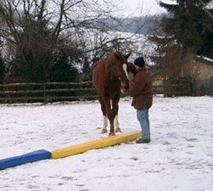 pferd kreuzt nicht vorhandwendung