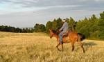 Vom Pferdekauf über die Pferdehaltung bis zur Pferdeausbildung