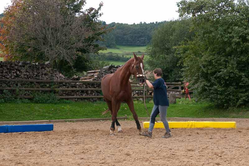 pferd longe innere schulter anheben