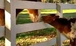 Mein Freund das Pferd – mal aus einer anderen Sicht…