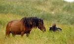 Wusstet ihr schon, dass es auch Wildpferde in Kanada gibt?
