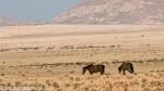 Das Namib-Pferd – Wildpferde der Wüste in Namibia