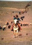 Wusstet Ihr schon, dass früher der Cowboyhut dem Cowboy nicht nur als Schutz vor Sonne und Regen diente?