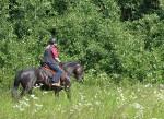 Wusstet ihr schon, dass Kamille nervöse Pferde beruhigt?