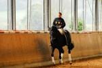 Der Fellsattel – die Alternative zum herkömmlichen Sattel für Pferde?