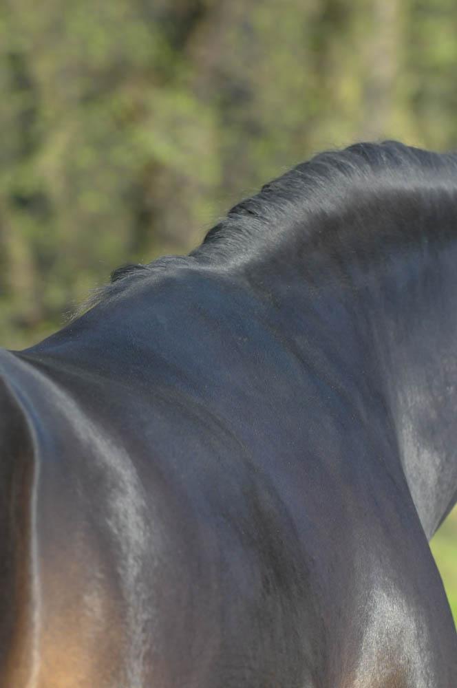 welcher gurt passt zu meinem pferd mattes