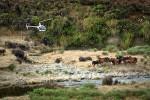 """Neuer Bericht: """"Die Kaimanawa Wildpferde -das Wildpferd Neuseelands- Rettung vor dem Schlachter"""""""