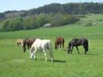 Niemprodukte für Pferde – Schutz vor Insekten und Wirkstoff gegen Sommerekzem