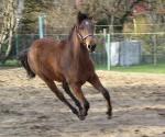 Pferdesprüche: Die Anmut eines Jungen Pferdes nicht ersticken…