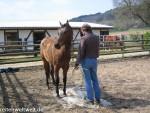 Pferdesprüche: … und ich flüsterte dem Pferd zu
