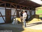 Hund und Pferd – Teil 1: Die Eingewöhnung in den Pferdestall