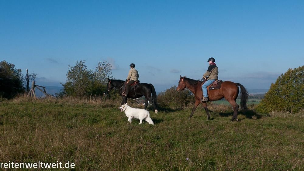 hund und pferd  u2013 teil 2  ausreiten mit hund und pferd