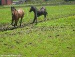 Pferdesprüche: Vernunft und Leidenschaft
