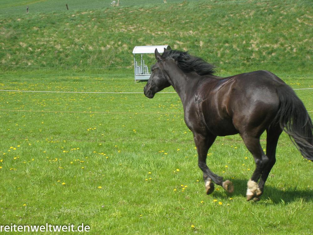 arthrose beim pferd wer rastet der rostet reiten reiten und pferde online. Black Bedroom Furniture Sets. Home Design Ideas