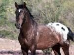 Der Mustang – amerikanisches Symbol der Freiheit!