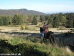 Pferdesprüche: Pferd und Wert