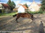 Pferdesprüche: Das Pferd und die Schöpfung