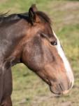 Pferdesprüche: Die Augen des Pferdes