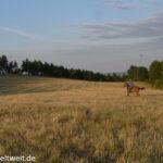 Die zehn Gebote der Pferde an ihre Besitzer