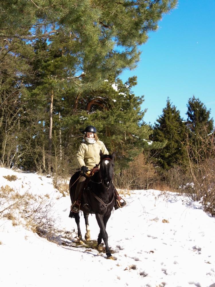 594371468ebcb0 Mit den Pferden in den Schnee - Reiten im Schnee | Reiten-weltweit ...