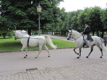 Fahren zu Pferd - Wolfgang Krischke
