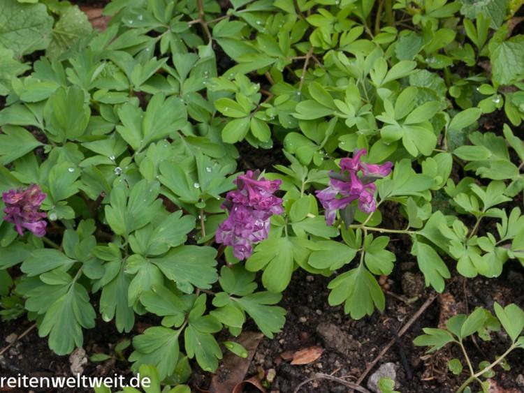 pflanzen-1090506